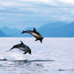 delfines laguna san rafael
